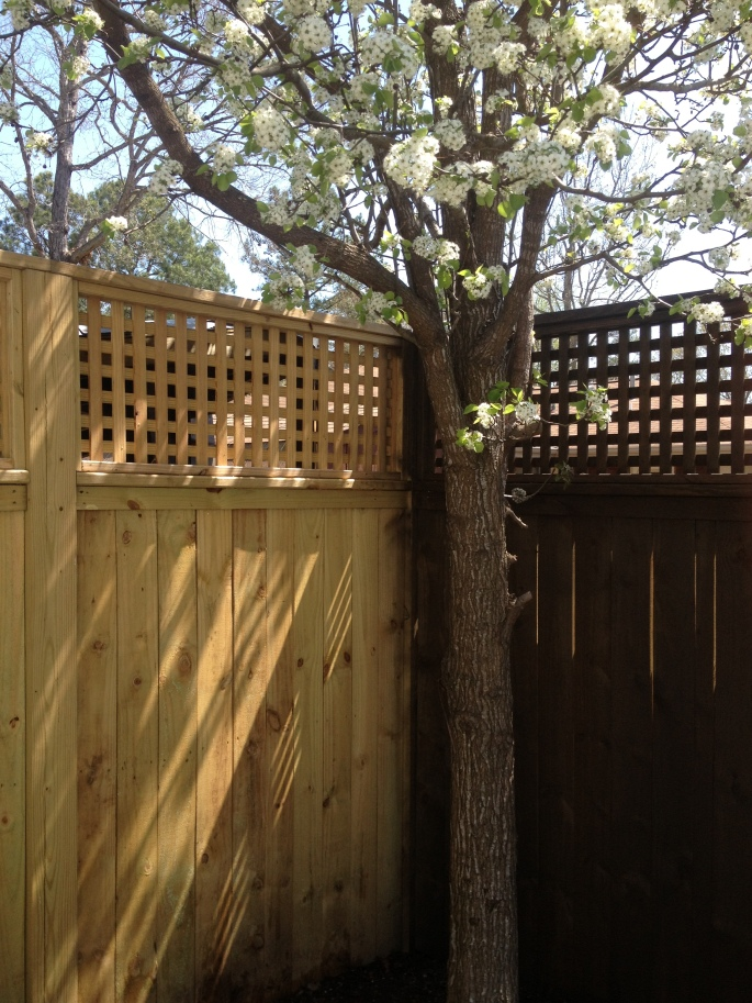 Poolside Fence - During